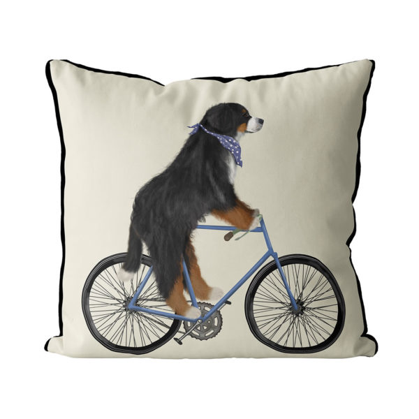 Bernese Dog on bicycle with cream background